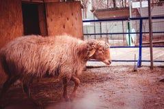 Farm- der Tierenagetierhaus des Tieres Stockfoto