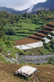 Farm in Dieng Royalty Free Stock Photo
