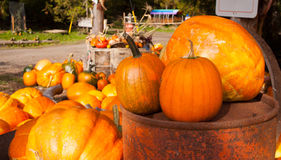 A farm display of pumkins in October, Cowichan Valley, BC Royalty Free Stock Photo