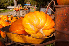 A farm display of pumkins in October, Cowichan Valley, BC Royalty Free Stock Photography