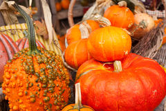 A farm display of pumkins in October, Cowichan Valley, BC Royalty Free Stock Image