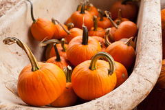 A farm display of pumkins in October, Cowichan Valley, BC Royalty Free Stock Images