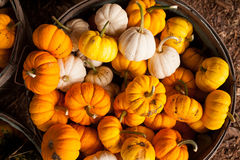 A farm display of pumkins in October, Cowichan Valley, BC Stock Photos