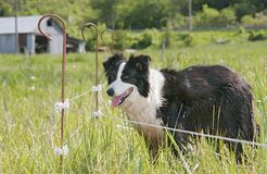 Farm dog Royalty Free Stock Photos