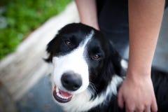 Farm dog getting stroked Royalty Free Stock Photos