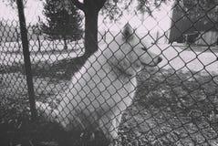 Farm dog stock image