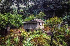 Farm on Dominica. Farm on the island of Dominica in the Caribbean stock images