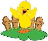 Farm duck Royalty Free Stock Photo