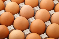 Farm egg in cardboard Royalty Free Stock Images