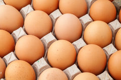 Farm egg in paper container Royalty Free Stock Photography