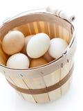 Farm eggs Stock Image
