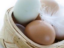 Farm eggs Stock Photo