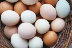 Farm eggs. Of different colors, natural and healthy royalty free stock photography