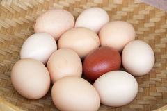 Farm eggs Royalty Free Stock Photos