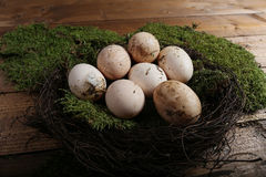 Farm eggs in a small nest Royalty Free Stock Photo