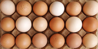 Farm eggs - variety of colors Stock Photos