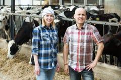 Farm employees in livestock barn Royalty Free Stock Photo