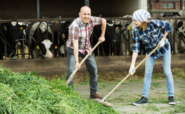 Farm employees with pitchforks near barn Royalty Free Stock Photography