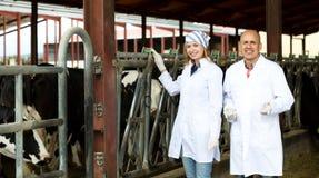 Farm employees standing near milking herd Stock Photography
