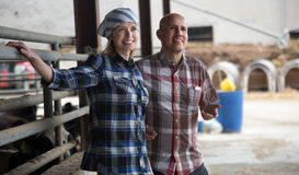 Farm employees working with milking herd in livestock barn Stock Image