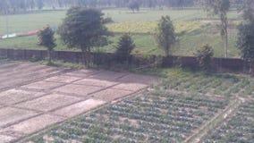 Farm. Er field  food vegetable Stock Photos