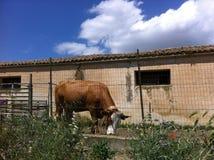 Farm Royalty Free Stock Image