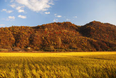 Farm. Land in Jilin Province, China Stock Image