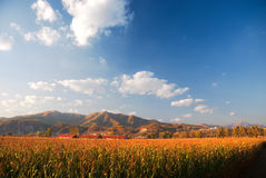 Farm. Land in Jilin Province, China Royalty Free Stock Images