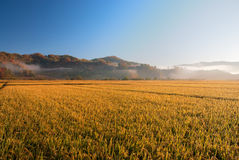 Farm. Land in the morning, Jilin Province, China Stock Image