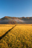 Farm. Land in the morning, Jilin Province, China Royalty Free Stock Photography