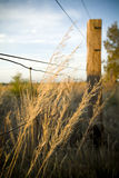 Farm Fence. Farm fencing in rural Australia. Tall grasses with wire farm fence and blue sky royalty free stock image