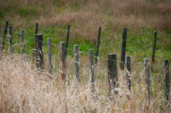 Farm fence with end of summer grasses Stock Photo