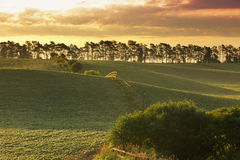 Farm field Royalty Free Stock Images
