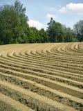 Farm field Stock Image