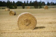 Farm Field Royalty Free Stock Image