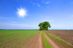 Farm field Stock Photography