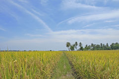 Farm Field. Path in farm field with blue sky and clouds Royalty Free Stock Image