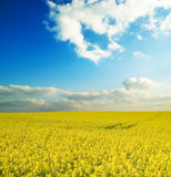 Farm field. stock photography