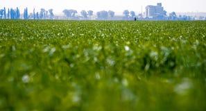Farm Field Royalty Free Stock Photo