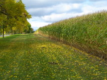 Farm field. In the autumn Stock Photo