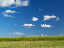 Farm field. Under the blue cloudy sky royalty free stock images