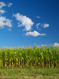 Farm field. Under the blue cloudy sky Royalty Free Stock Image