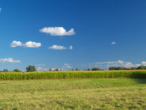 Farm field. Under the blue cloudy sky stock image