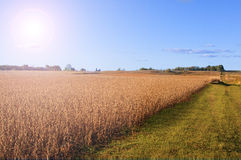 Farm Field backgound Stock Photo