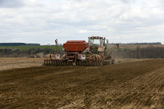 Farm field cereals Royalty Free Stock Photo