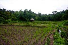 Farm field Stock Photography