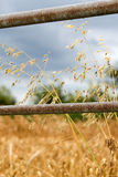 Farm Field Gate and Wheat Royalty Free Stock Images