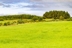 Farm field in Greenway route from Castlebar to Westport. Ireland royalty free stock images
