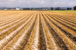 Farm Field Harvested Ready for Plow New Planting Stock Photography