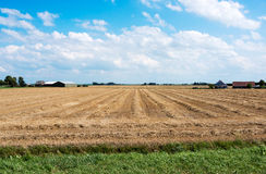 Farm field in holland Stock Photography